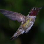 Life after Google's Hummingbird algorithm update – what does it all mean?